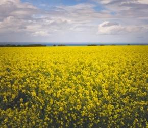 Prolongation de l'aide au logement pour les saisonniers agricoles